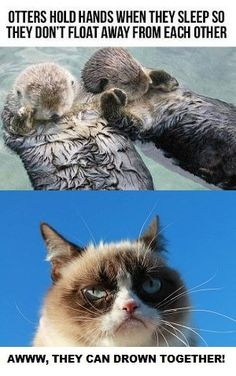 grumpy cat y you so funny? Funny Animal Quotes, Cute Funny Animals, Funny Animal Pictures, Funny Cute, Cute Cats, Hilarious, Animal Humor, Grumpy Cat Quotes, Funny Grumpy Cat Memes