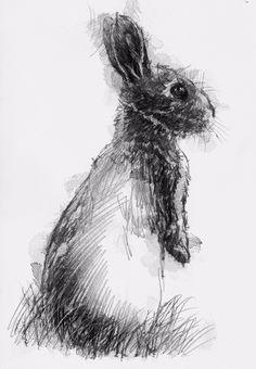 Animal Sketches, Animal Drawings, Drawing Sketches, Art Drawings, Rabbit Drawing, Rabbit Art, Scribble Art, Nature Sketch, Bunny Art