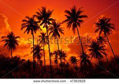 Romantyczny Zachód Słońca zdjęć stockowych, obrazów i zdjęć | Shutterstock