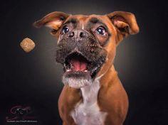 Забавные фотографии собак, ловящих лакомства (7)