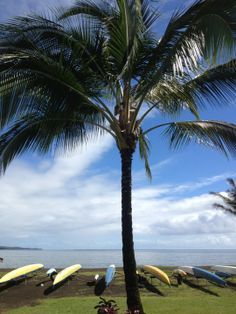 Hilo Bayfront, Hawii