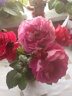 Flowers / from garden