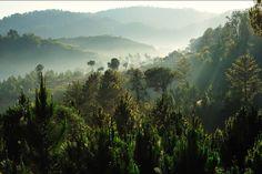 La forêt malgache