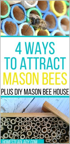 4 simple steps to attract mason bees to fruit trees l Includes instructions for DIY mason bee house, facts, care and use of mason bees in the home orchard l Homesteadlady.com #bees #masonbees #pollinators #homesteading #fruittrees #organicorchard Growing Herbs, Growing Vegetables, Mason Bees, Natural Pesticides, Bee House, Modern Homesteading, Small Farm, Raising Chickens, Beekeeping