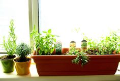 Grow your own herbs and vegetables. | 16 Tips From The Depression Era That Are Actually Life Hacks