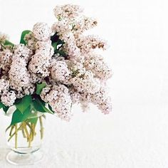 Lilacs are a new fave!