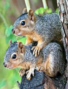 Bro...you need to get off my back...(Feelin' Squirrely group board)