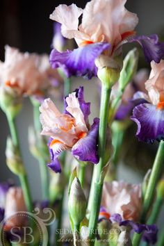 Bearded Iris Flower Arrangements | Bearded Iris Are Exotic, Gorgeous And Entertaining
