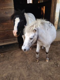 This is Willy and Dandy 2 of my 5 horses