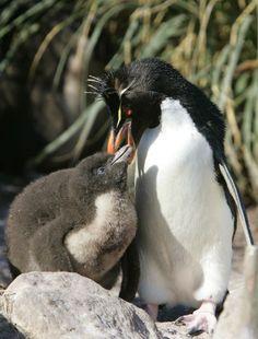 Copyright © 2008 Penguin-Pictures