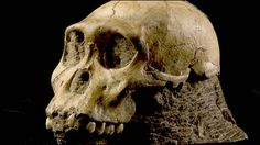 Australopithecus sediba, about 2 million years old.