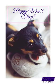 Have you welcomed a new fur member into your family but they just won't stay asleep? Never fear, we have the 15 top tips that actually work, to guarantee a sleeping household. #Puppytips #newpuppy #sleeplessnights #puppytraining #puppy #puppyadoption Leash Training, Crate Training, Dog Training Tips, Dog Dental Care, Pet Care, Sleeping Puppies, Sleeping Through The Night, Dog Hacks, Sleepless Nights