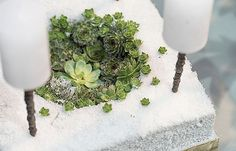 at - Detail Terrarium, Winter, Detail, Home Decor, Weihnachten, Nice Asses, Terrariums, Winter Season, Home Interior Design