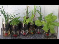 Mundo das Plantas : Horta Vertical 4- Vaso Auto Irrigável de Garrafa P...