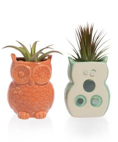 Look what I found on #zulily! Owl Planter & Air Plant - Set of Two #zulilyfinds