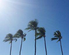 Happy Monday! #Kapalua #Maui #MerrimansKapalua #MommaLoveBaby