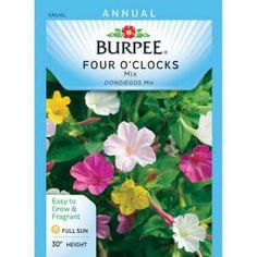 recipe: bush bean seeds home depot [36]