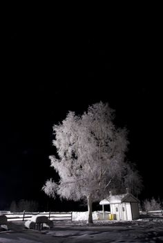 The postcards scenes you see in the Fairbanks area even at night during the winter are numerous and so captivating. Like this tree located at Creamers Field near the farm house. Photo by Sherman Hogue/FCVB