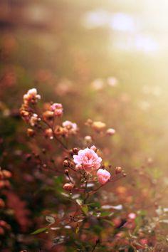 spring flowers in sunlight