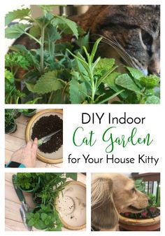 DIY Indoor Cat Garden for Your House Kitty