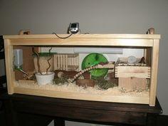 DIY Hamster Habitat :)