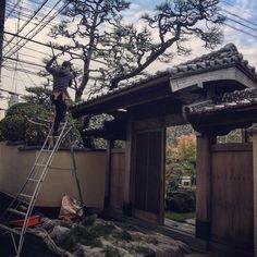 一番大切な掃除を頑張る哲平くん . . . #今日のてっぺい君#掃除中#門かぶり#松 #数寄屋門#成長中#庭#garden #庭や#niwaya #徳島#tokushima #japan #landscape #gardener #landscaper #green#今日もお疲れ様でした#応援してください