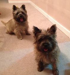 Lemmy & Lola