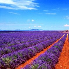 France - Provence - http://www.travelmoodz.com/en/travel-professional/rogerio-silva