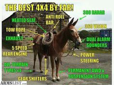 Mules and Hinnies are equine hybrids; the offspring from two different domesticated breeds: horses and donkeys. (Scroll down to bottom of article to learn about 'Terminology'). Aficionados of mules… Best 4x4, All Terrain Tyres, Funny Horses, Laugh Out Loud, The Funny, I Laughed, Laughter, Good Things, Donkeys