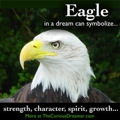 An eagle in a dream can symbolize strength, character, spirit, growth...  More at TheCuriousDreamer.  #DreamMeaning #DreamSymbol