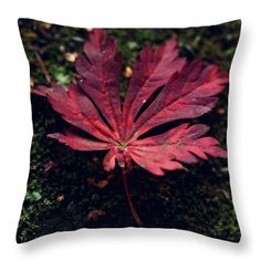 Autumn Throw Pillow featuring the photograph Fall Is On The Way by Helen Kelly
