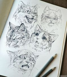 If there is one thing I enjoy drawing probably the most is expressions on semi realistic animals So here have a bunch of cats making - #drawings Animal Sketches, Drawing Sketches, Drawing Tips, Drawing Ideas, Drawing Techniques, Drawing Tutorials, Art Tutorials, Cat Drawing Tutorial, Arte Sketchbook