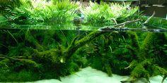 #adana #aquascape #terrarium