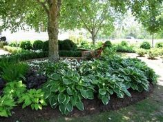 Beautiful Hostas in bed surrournding the tree and accenting the patio