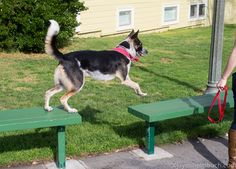 How to turn a dog walk into a dog challenge - Great for city walks ideas. #dog #walk #city