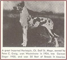 CH Dolf St. Magn, harl, born 1928, imported to US. One of the most internationally famous harls of all time. Won German Sieger in 1930, 34 best of breeds in the US including BOB Westminster 1934.