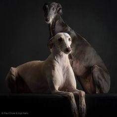 Paul Croes - Behind eyes - Animal Photography in studio