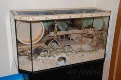 Great Hamster Home ! Big Hamster Cages, Gerbil Cages, Hamster Life, Hamster Habitat, Hamster Toys, Hamster Stuff, Rat Cage, Pocket Pet, Terrarium