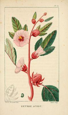 Flore pittoresque et médicale des Antilles v.1 Paris Pichard,1821-1829.