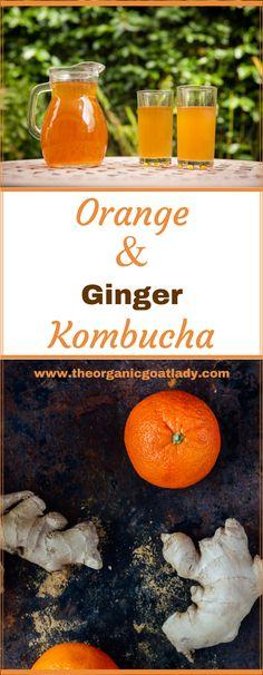 Kombucha Flavors. Orange and Ginger Kombucha. Probiotic Drinks. Best Kombucha flavors!