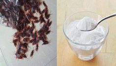 Cockroaches make us cringe as they're gross and awful, and it's not uncommon for them to carry dangerous diseases considering the conditions they live in. There are many ways you can get rid of them,