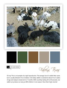 Now here's an example of high volume - rapid reproduction! Wildlife influence - Location: Fabens, Texas - mejudydesign.com Rabbit Litter, Baby Kit, Color Stories, Wildlife, Texas, Movie Posters, Design, Texas Travel, Film Poster