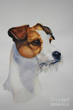 Fine Art Parsons Jack Russell Terrier Watercolor Portrait