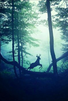 In the foggy forest...