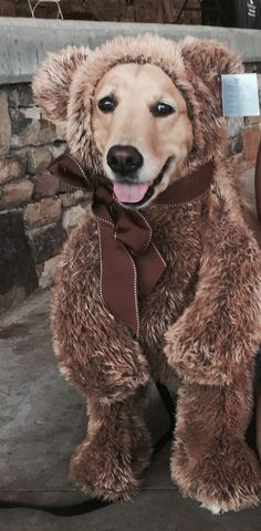 Golden retriever Halloween costume