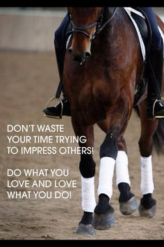 Horse Quotes | Don't waste your time