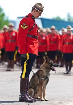 During the funeral procession in Moncton, Canada, Danny could be heard whimpering by the side of the casket of Mountie Constable Dave Ross. Canadian Things, I Am Canadian, Canadian History, Dave Ross, Ontario, Dog Crying, Canada Eh, Canada Memes, War Dogs