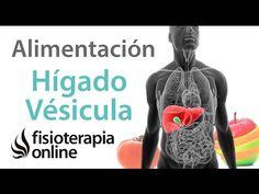 Alimentación, nutrición y limpieza para la disfunción de hígado y vesícula biliar. | Fisioterapia Online