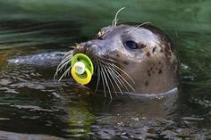 seal with paci