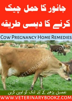 Animal Pregnancy Test at Home in Urdu and Hindi – Free Veterinary Books in Urdu PDF Animal Medicine, Medicine Book, Dairy Form, Animal Treatment, Horse Anatomy, Animal Nutrition, Goat Farming, English Vocabulary Words, Free Books Online